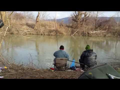 Pescuit la feeder Crisul Alb