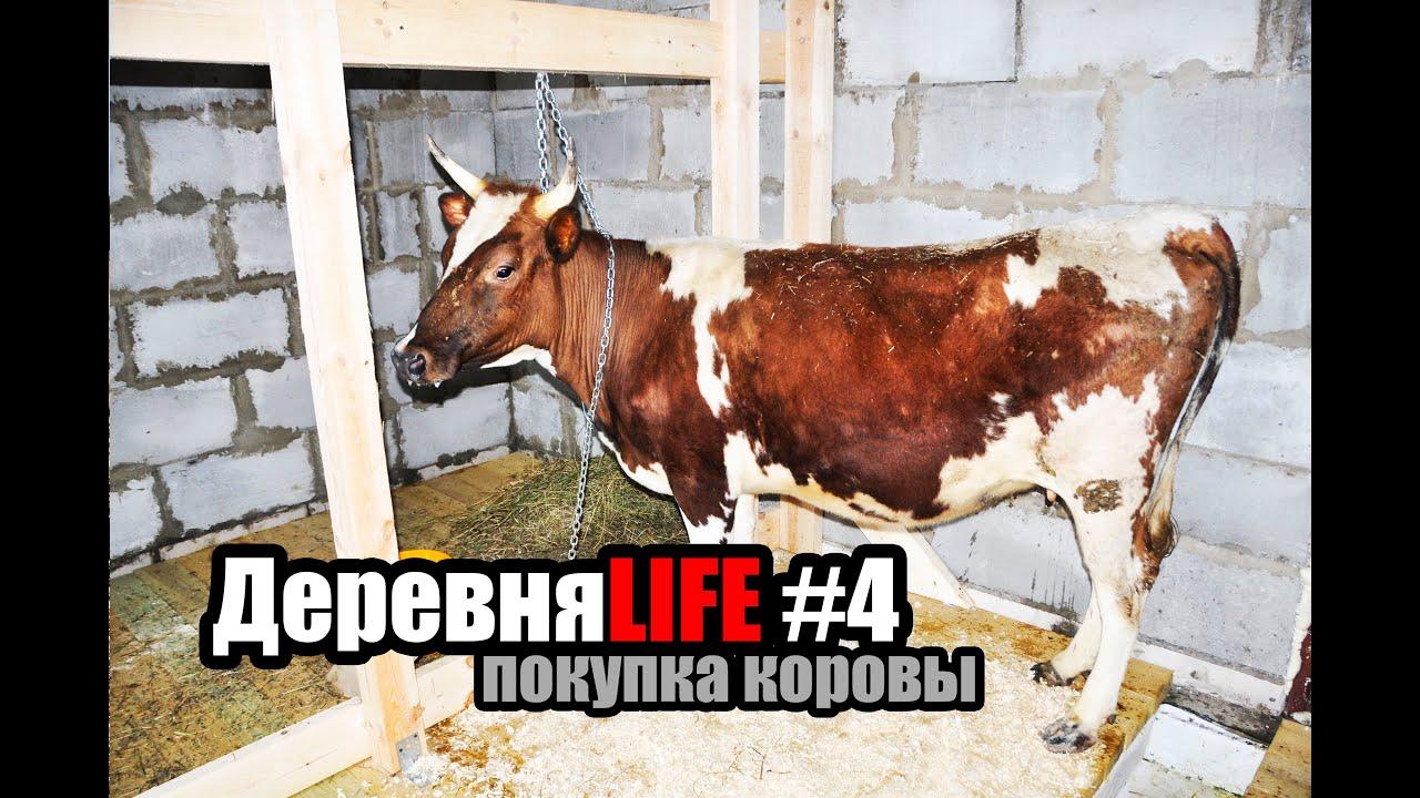 Сделал корове куни фото 147-509