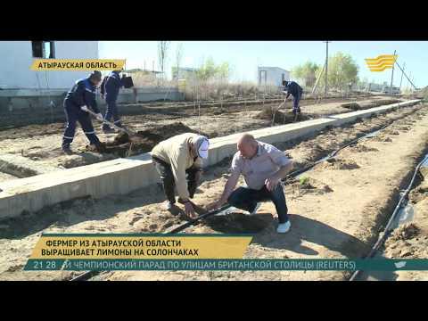 На западе Казахстана заложили первый лимонарий