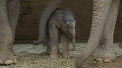 Guter Start fürs Elefantenbaby