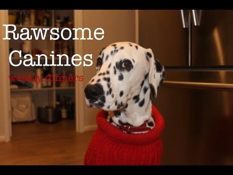 RAWsome canines | Week of RAW feeding