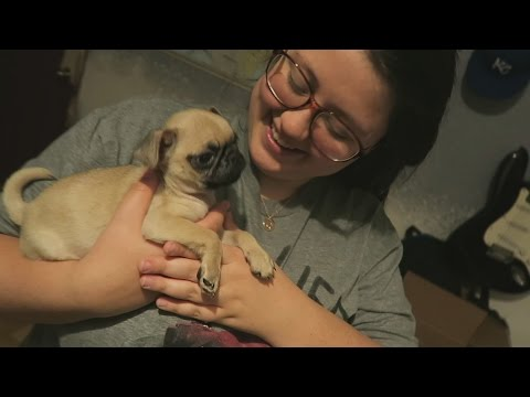 SURPRISING MY GIRLFRIEND WITH A PUG!