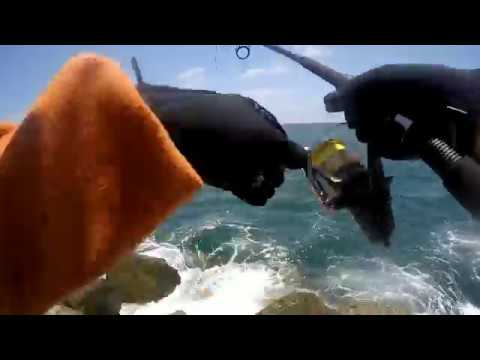 Giant Black Sea Bass California Jetty Fishing!