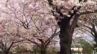 Video Sakura download MP3, 3GP, MP4, WEBM, AVI, FLV Juli 2018