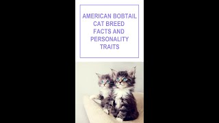American Bobtail Cat Breed Facts and Personality Traits #Shorts