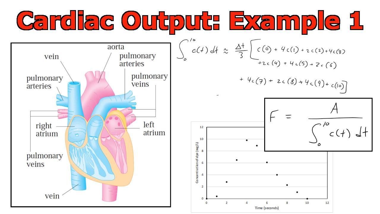 cardiac output The cardiac output (co) measures how much blood the heart pumps per minute it is directly related to the stroke volume and heart rate (hr) the stroke volume (sv) is the amount of blood in the left ventricle of the heart just before it contracts.