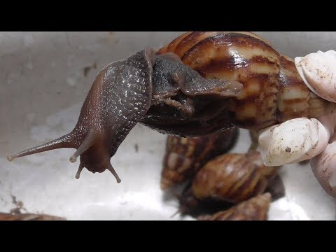 Vietnam Street Food - Cooking 100 Snails For 3 People Family Dinner Meal In Vietnam
