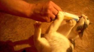кошка Алиса чистит зубы Colgate