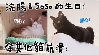 【黃阿瑪的後宮生活】浣腸&Soso的生日!令其他貓崩潰!