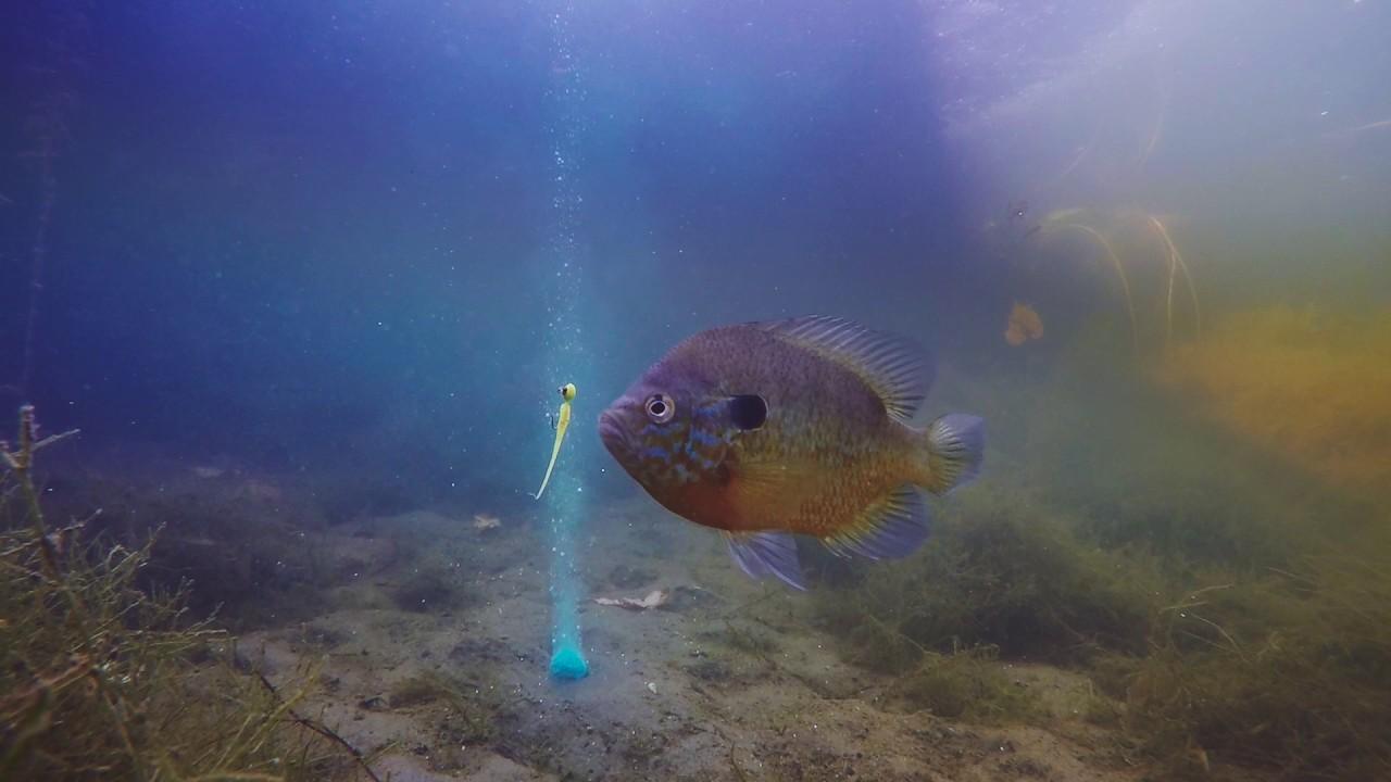 Panfish love baitcloud youtube for Baitcloud fish attractant