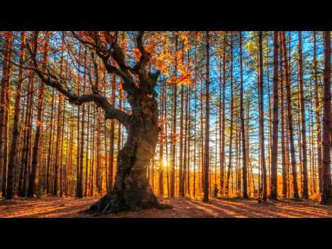 Schubert - Symphony No 8 in B minor, D 759 - Sanderling