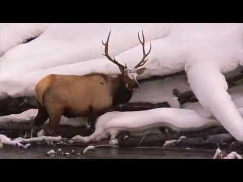 Snowcoach Yellowstone Winter 2014-15