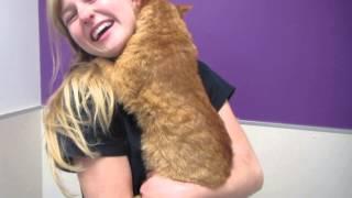 Wulfgar The Hugging Cat