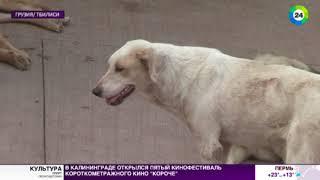 Грузия. Приют для бездомных животных.