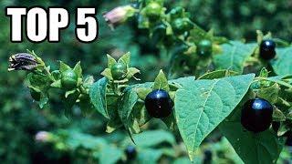 TOP 5 - Smrtelných Rostlin