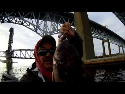 Blackfishing In CT, Great Fish Action Video