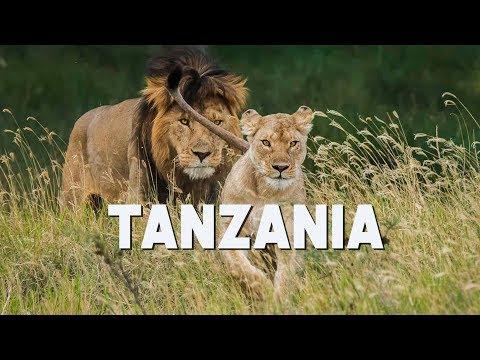 Tanzania Safari - Serengeti, Ngorongoro, Tarangire, and Lake Manyara | 2017