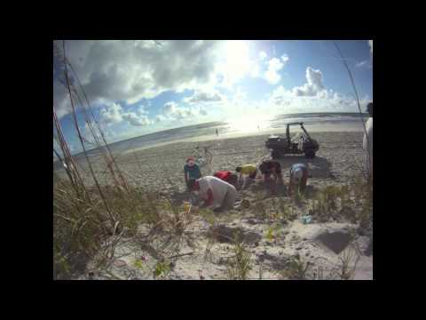 Loggerhead Turtle Nest Time Lapse at Atlantic Beach, Fla.