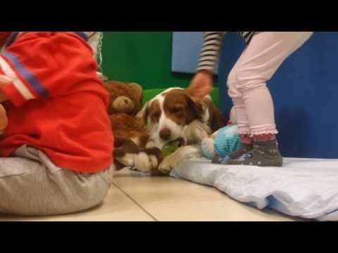 Pet education all'asilo nido