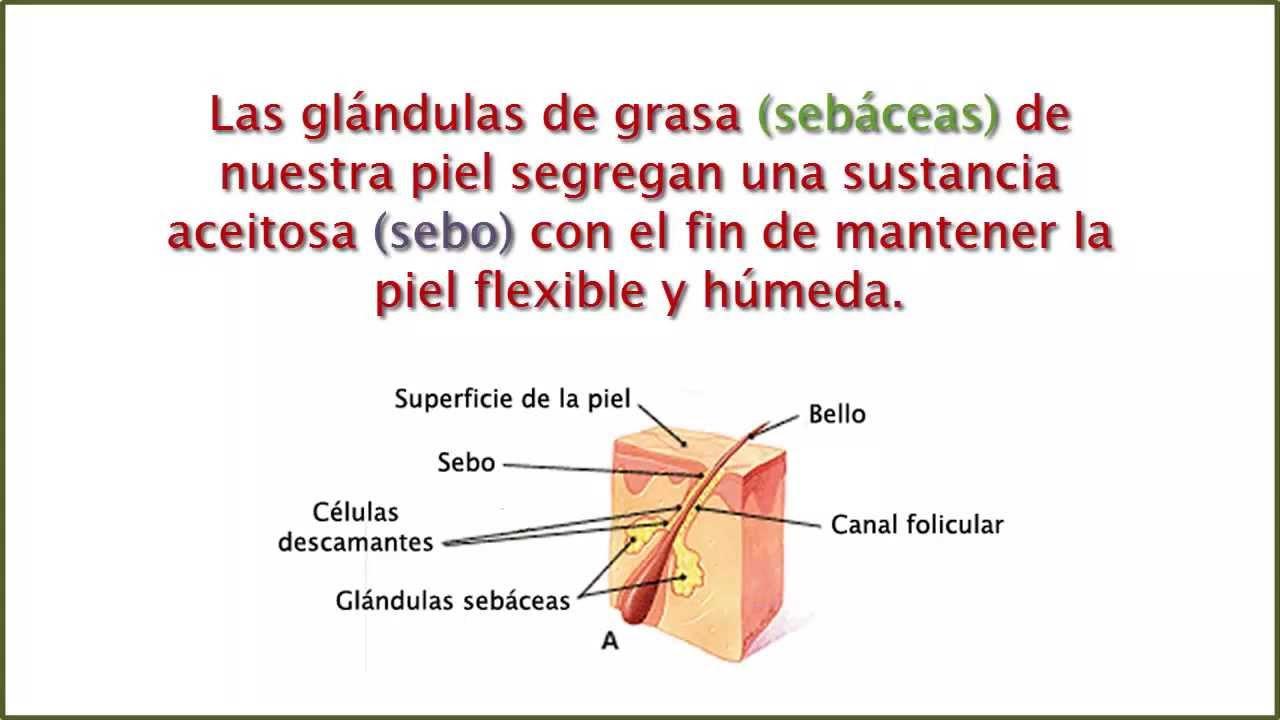 Acn qu es el cne caracter sticas y c mo se forma for Como se extrae el marmol