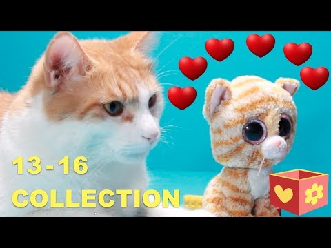 Simba and George | Cute and funny cats | Bellboxes | Collection