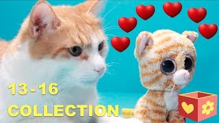 Simba and George   Cute and funny cats   Bellboxes   Collection