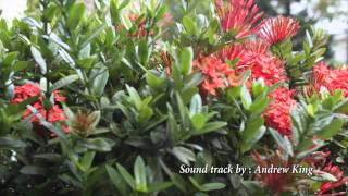 nature in it s natural form ixora plant