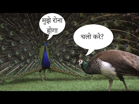 [Hindi] SHOCKING! This Judge thinks Peacock donot have sex
