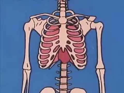 Los Huesos y el Esqueleto - YouTube