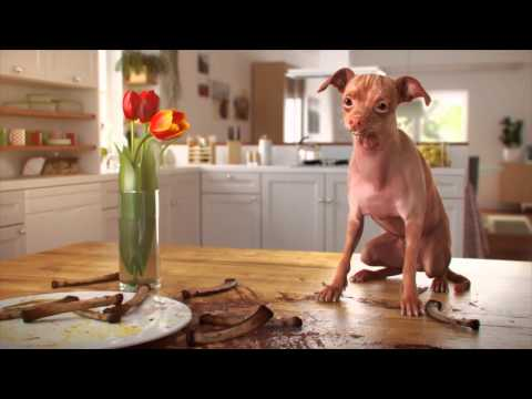 KOFOLA DOG- Tulip, full CGI TV commercial.