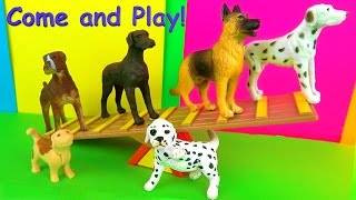Hi its Kerry! Learn about Dogs and Puppies. Today we are looking at...