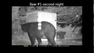 Watch Bears Try To Get In A Trash Shed