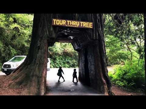 Redwood, Coastal California and Oregon
