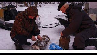 Рыбалка на жерлицы. Зимняя рыбалка в феврале. Часть 2