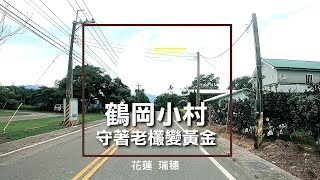 193縣道 花蓮旅遊 瑞穗景點 鶴岡小村 守著老欉變黃金 - 美景系列