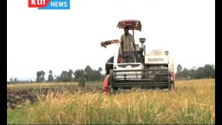 The Chamwada Report:  Status of Rice Farming in Kenya Episode 64 09/10/10