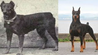 These Photos Of How Dogs Have Evolved Will Shock You And Probably Anger You