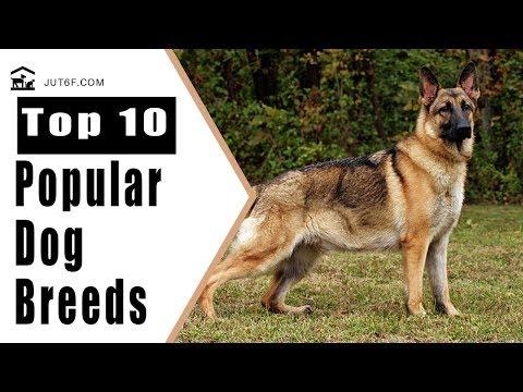 Most Popular Dog Breeds - Top 10 Most Popular Dog Breeds in America