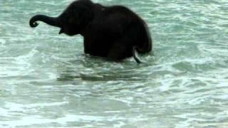Adorable baby elephant enjoying playtime