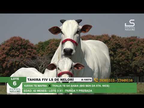 Lote 6 Tahira FIV LS