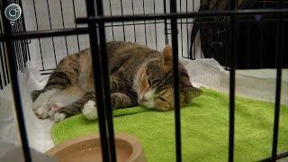 В России могут запретить контактные зоопарки и обязать регистрировать домашних животных