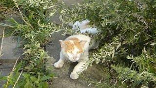 貫禄はありますが、人間には警戒するボス猫ですwww.