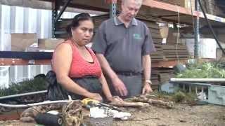 Paul Isley - Rainforest Flora, Inc - Mounting Tillandsias
