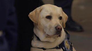 شاهد: كلبة بوش مع المشيعين في مبنى الكونغرس