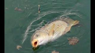 Как увеличить количество поклевок на рыбалке