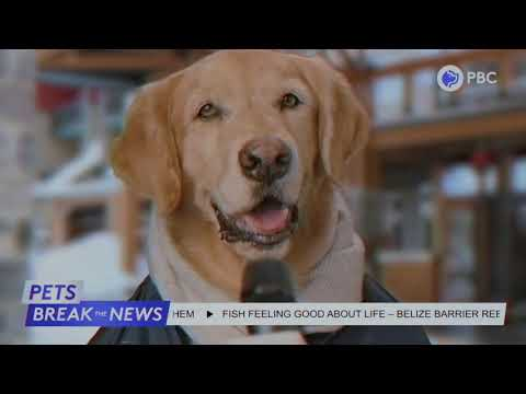 Pets Break the News - New Year, New Law