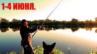 Рыбалка Три Дня на Реке с Больничкой и Афиногеном Щука на Живца в Нерестовый Запрет