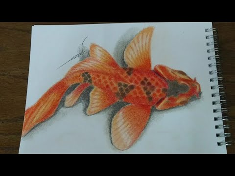 How I Draw A 3D Koi Fish