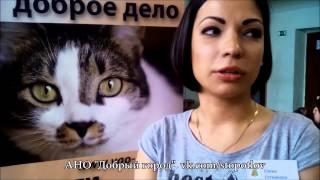 Выставка пристройство бездомных кошек в Королёве