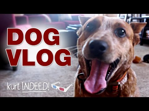 DOG VLOG! Adopted an Australian Cattle Dog